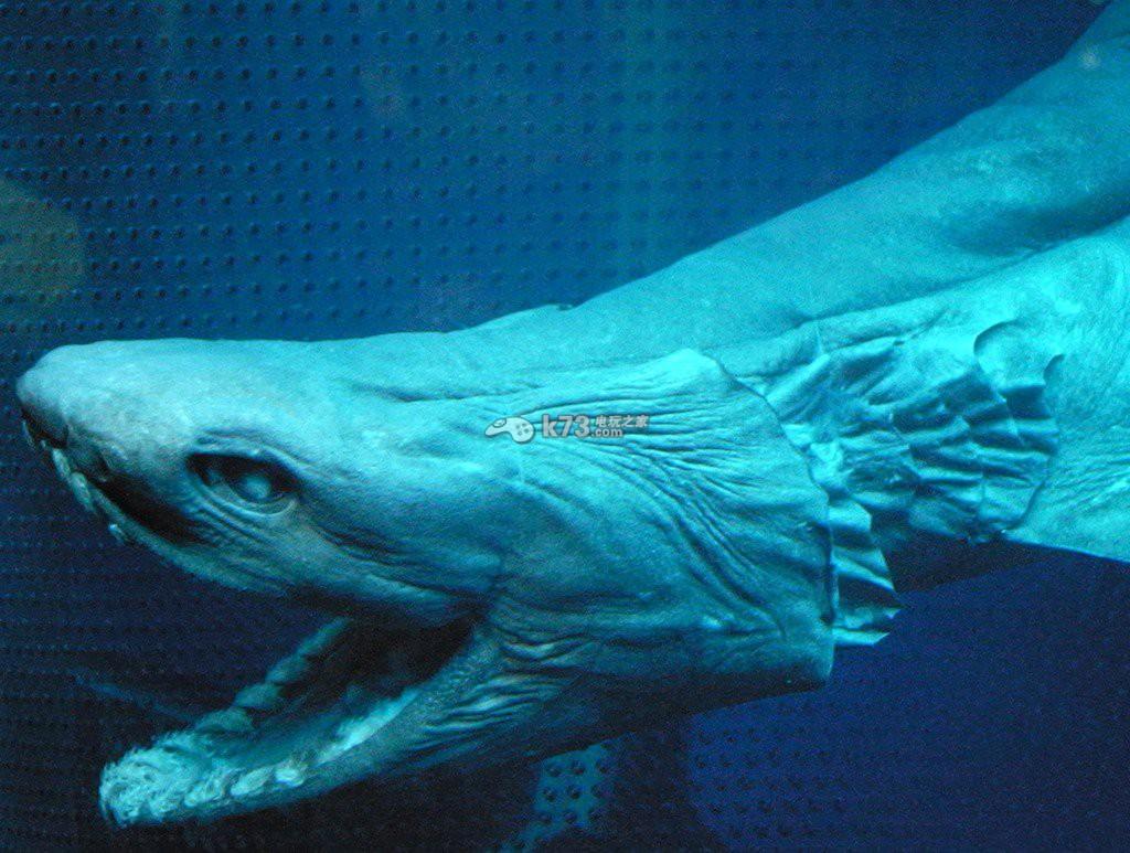 怪物獵人4g》鮫鯊設計原畫靈感圖...